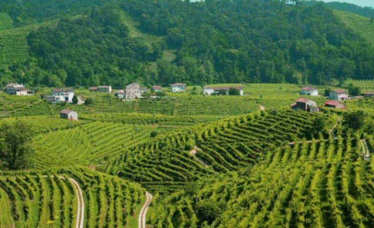 Глава холдинга из Тараклии рассказал, как продал завод в Крыму и планирует производить вино в Италии