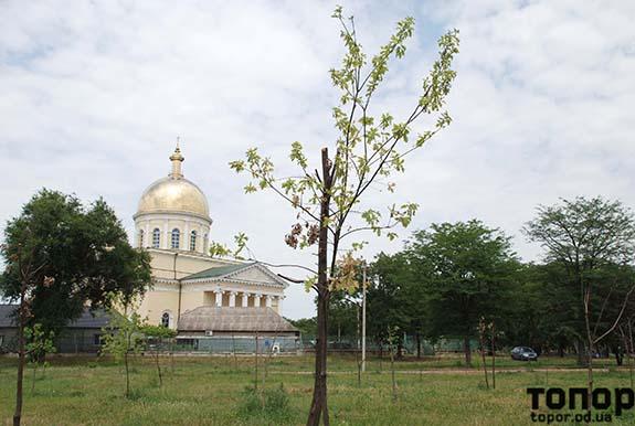 В Болграде убили дубовую рощу