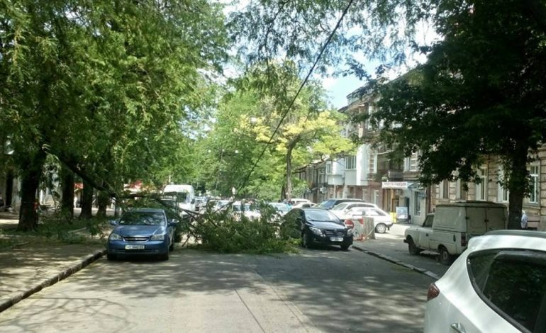 В центре Одессы ветка дерева упала на электропровода