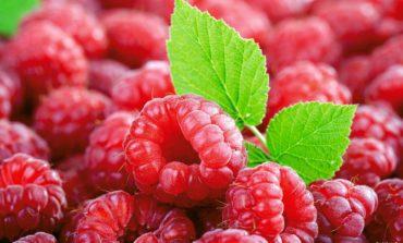 Растет экспорт украинских замороженных ягод
