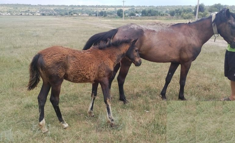 В Арцизском районе рецидивист ради забавы украл лошадь с жеребенком