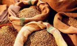 Аграрии Украины собрали более 20 миллионов тонн зерна