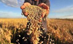 В Одесской области для помощи аграриям выделят 25 миллионов