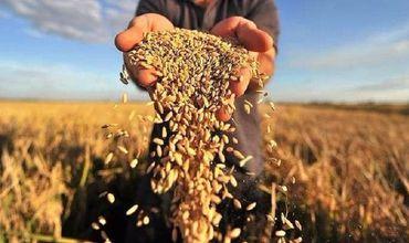 В Минагропроме не намерены вводить  ограничение на экспорт зерна