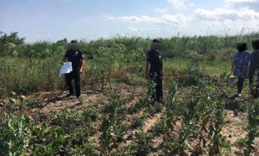 В Татарбунарском районе ликвидировали три точки выращивания наркотических растений