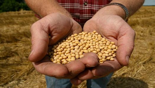 Украина побила рекорд по экспорту органической сои
