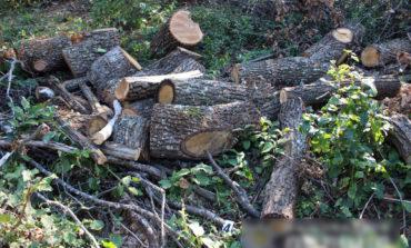 В Одесской области пресекли незаконную вырубку леса