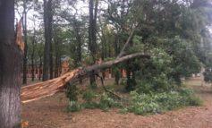 Штормовое предупреждение: в Измаиле на проспекте Суворова рухнуло дерево (фото)