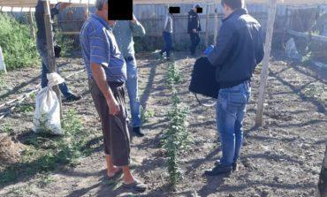 Конопля в теплице: житель Болградского района решил подзаработать
