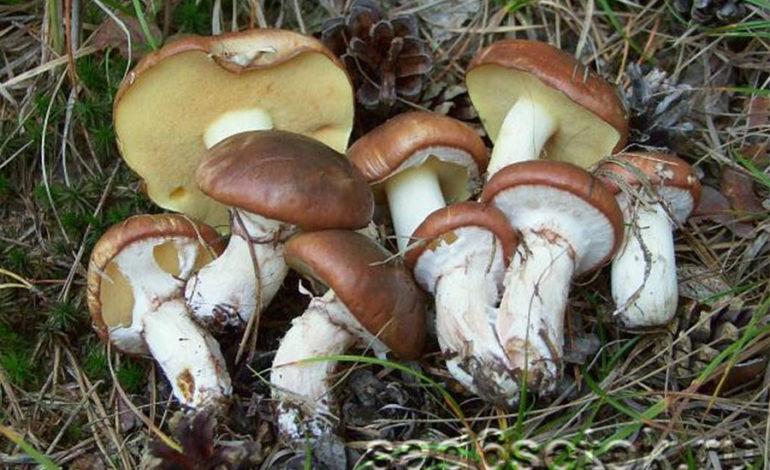 В Одесской области с начала года уже несколько человек отравились грибами