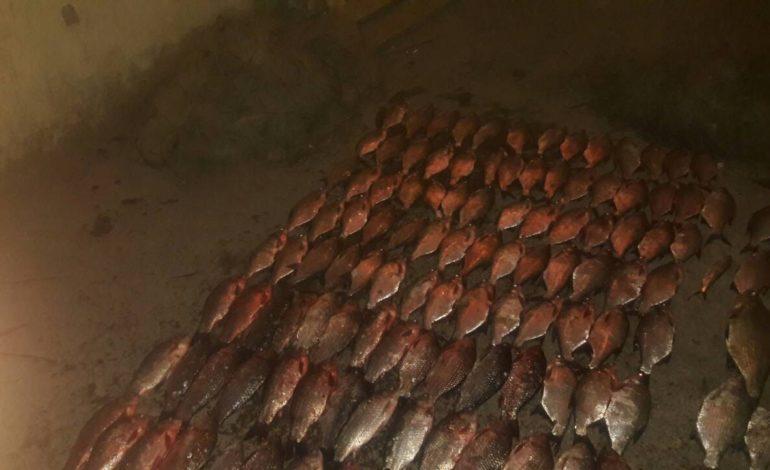 На озере Кагул обнаружили полкилометра браконьерских сетей с рыбой