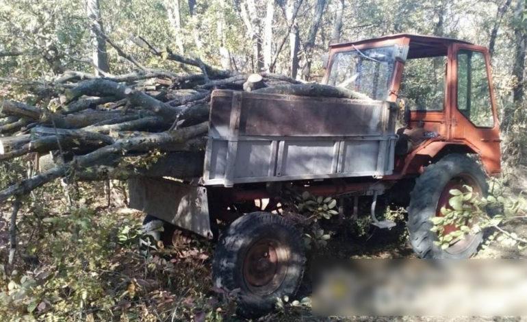 В Арцизском районе пресекли незаконную вырубку леса