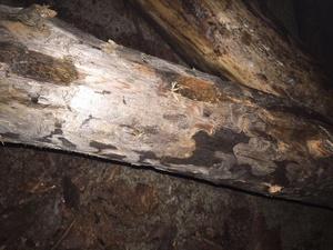Боролись с «контрабандой» и опростоволосились: в Рени депутаты-прогульщики не смогли отличить дрова от древесины