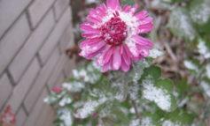 В Арцизе  пошёл первый снег (фото)
