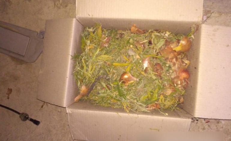 Житель Болградского района хранил дома килограмм марихуаны