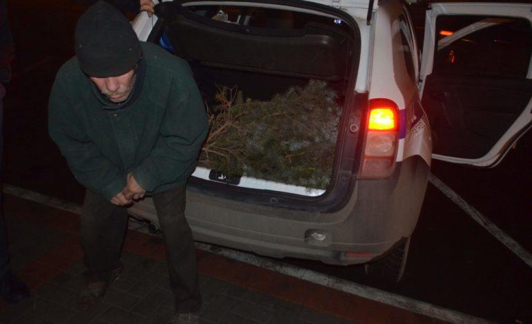 В Измаиле возле мэрии мужчина спилил ветви голубой ели (ФОТО)