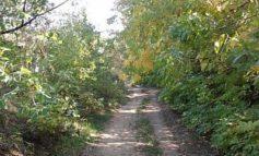 В Белгород-Днестровском районе пересчитали лесопосадки