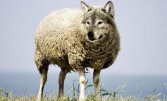 В Ренийском районе впервые за много лет появились волки