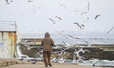 Побережье Одессы в феврале: люди, чайки и коты (фото)