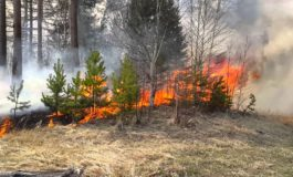 «Теневая цена» брынзы: в Ренийском районе пастухи поджигают сосновые рощи и заросли камыша