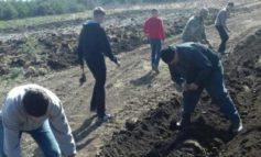 Дети Белгород-Днестровского района традиционно сажали деревья