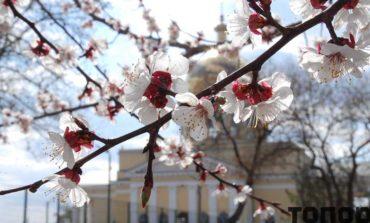 Болград цветущий (фоторепортаж)