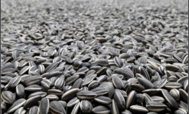 Житель Одесской области представился перевозчиком и украл 22 т семян подсолнечника