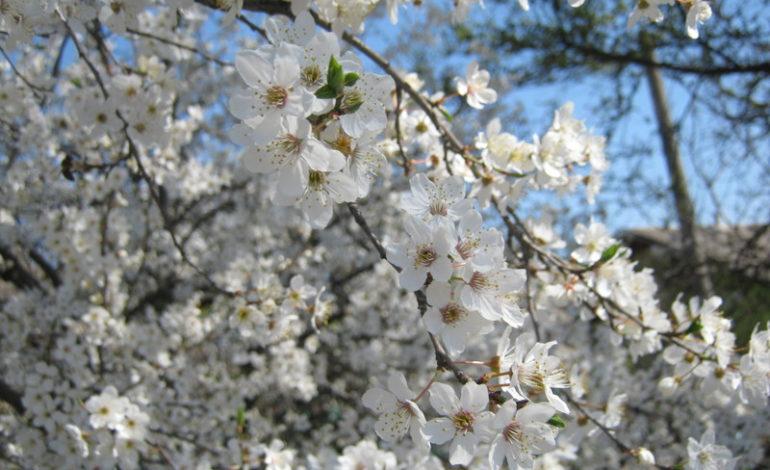 Арциз в апрельских фотоэтюдах (ФОТО)