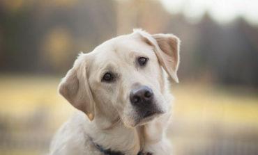 В Аккермане стреляли в бездомных собак: полицейские проводят расследование