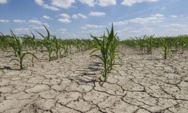 Украинская трын-трава: экономический «сорняк», убивающий лучшие в мире чернозёмы