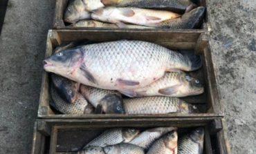 Разрешения на вылов рыбы будут продавать через ProZorro