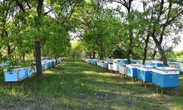 В Болграде расследуют массовое убийство пчел