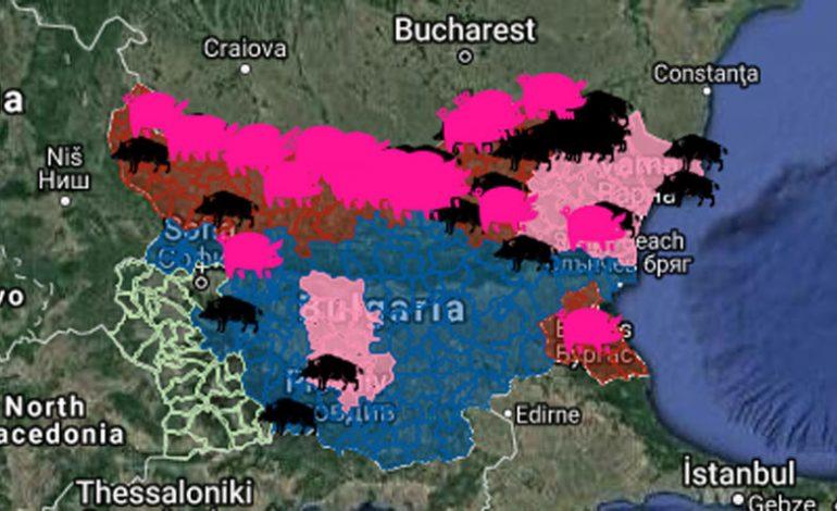 АЧС по-соседству: в Болгарии из-за массового истребления свиней прогнозируют дефицит мяса и рост цен на свинину