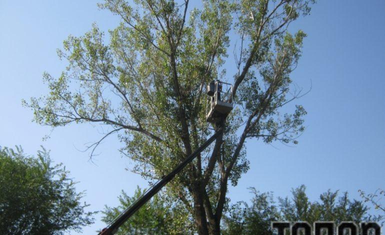 В Арцизе коммунальщики проводят санитарную обрезку деревьев (ФОТО)