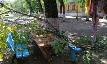 В Арцизе ветки деревьев создают аварийные ситуации