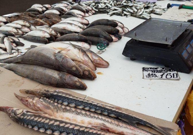 Одесский рыбоохранный патруль изъял у браконьеров краснокнижную рыбу и 150 кг мидии