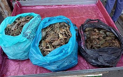 В Белгороде-Днестровском идёт «охота» на продавцов раков