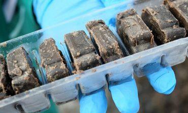 В Арцизском районе проведут иммунизацию диких животных против бешенства