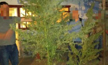 Житель Тарутинского района выращивал у себя на приусадебном участке наркотические растения