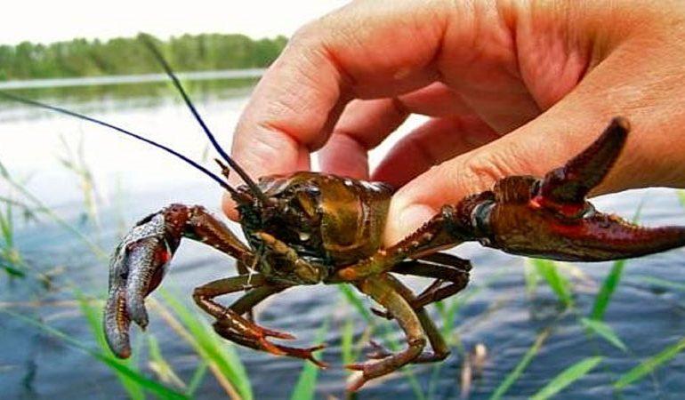 В южной Одесчине запретили ловить раков