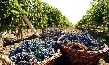 В Болградском районе назвали урожайность подсолнуха, кукурузы и винограда