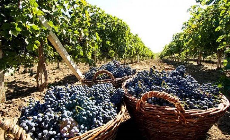 В Одесской области стремительно сокращается производство вина и виноматериалов