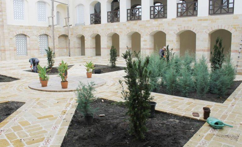На территории Арцизской базилики высадили вечнозеленые деревья (ФОТО)