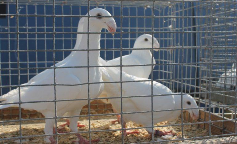 Выставка декоративных птиц в Татарбунарах – глазами арцизских туристов (ФОТО)