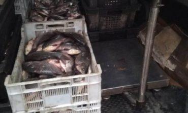 Караси и карпы, щуки и сомы: в Рени два центнера рыбы не доехали до покупателей
