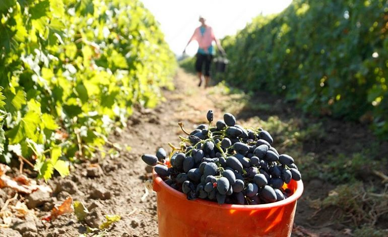 В Арцизском районе продолжаются осенне-полевые работы