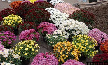 Болград украсили цветами (фото)