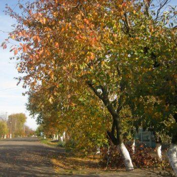 Золотая осень в Арцизе (фотореп)