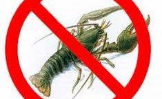На Дунае запрещен вылов раков
