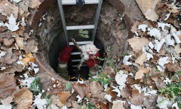 Как в Одессе кота спасали (фото)